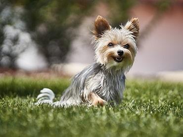 Hunde - Fotoshooting
